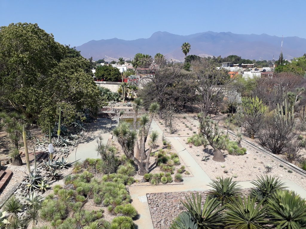 Botanical Gardens in Oaxaca City